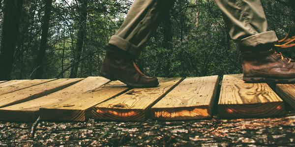 Forest Technician