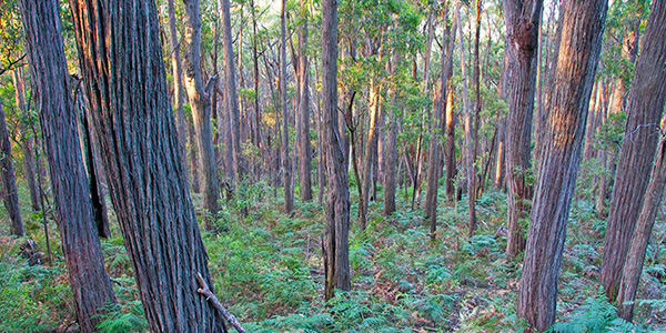 Forest Growing & Management Qualifications